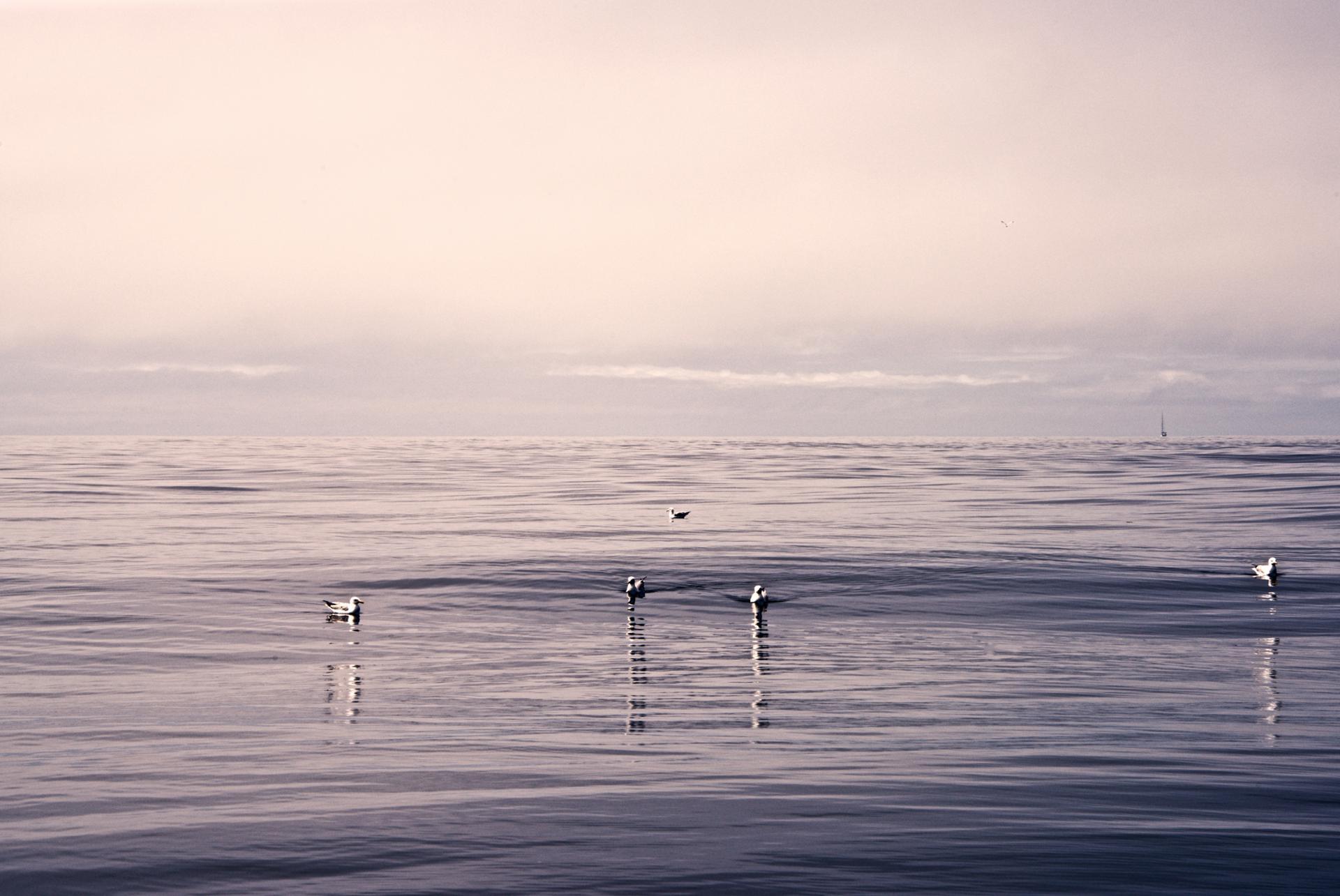 Arrive un moment où l'on ne voit plus la côte