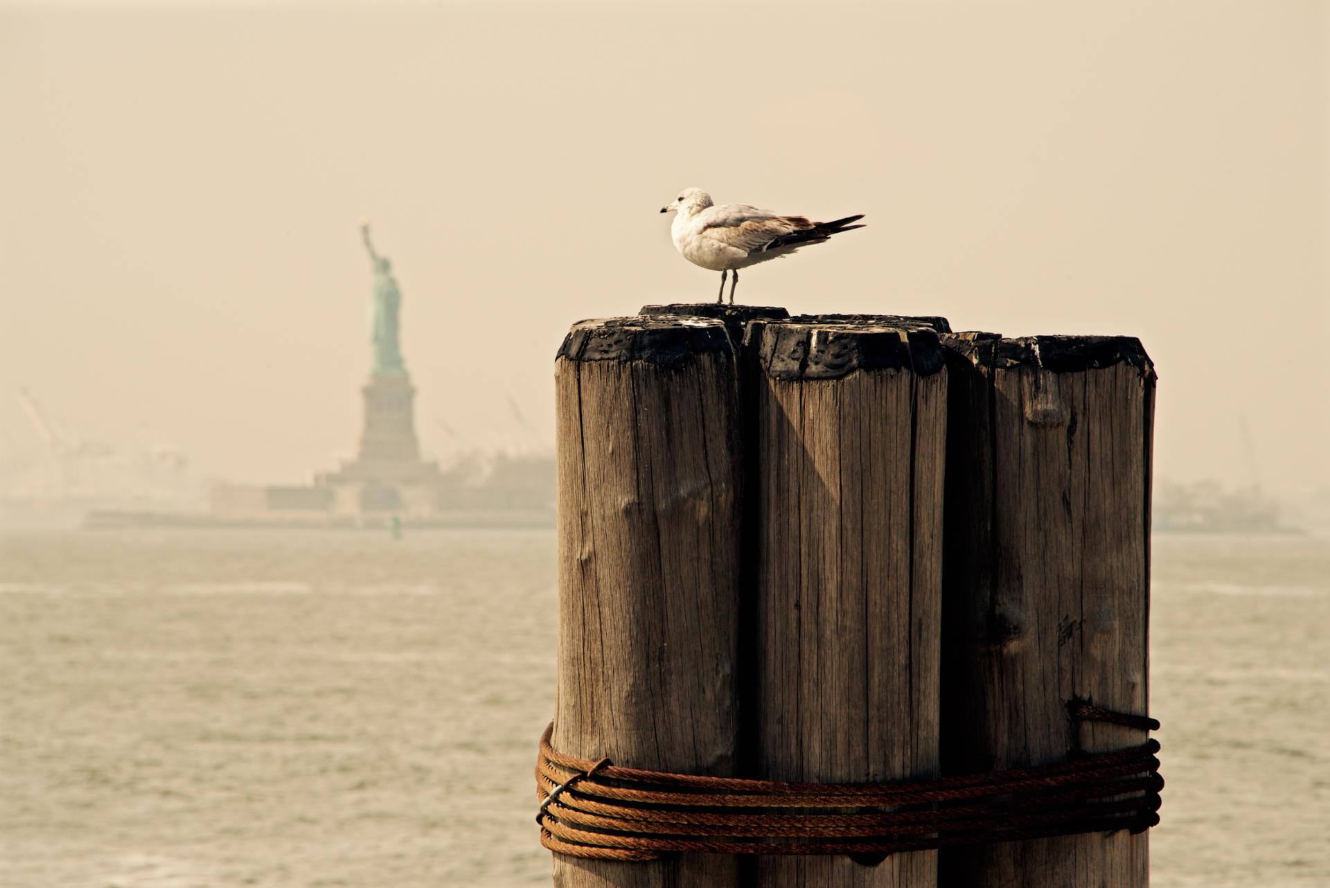 Miss Freedom and the seagull