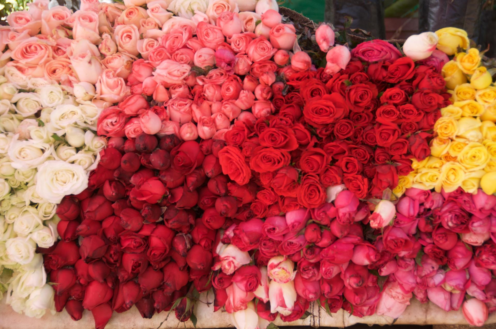 Marché aux roses