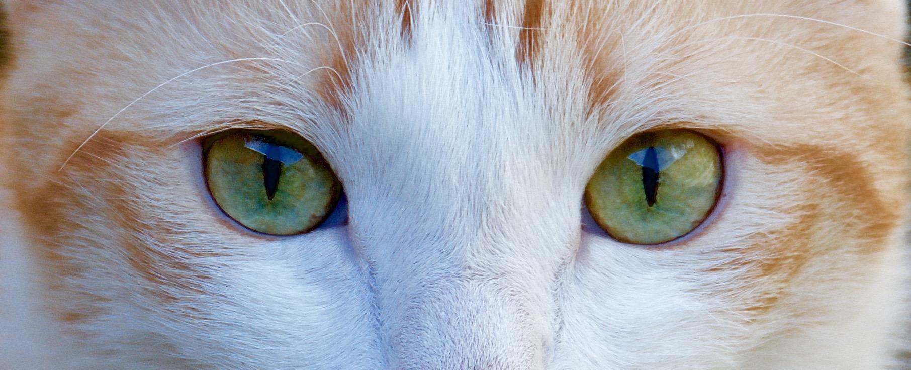 Les yeux dans les yeux ...
