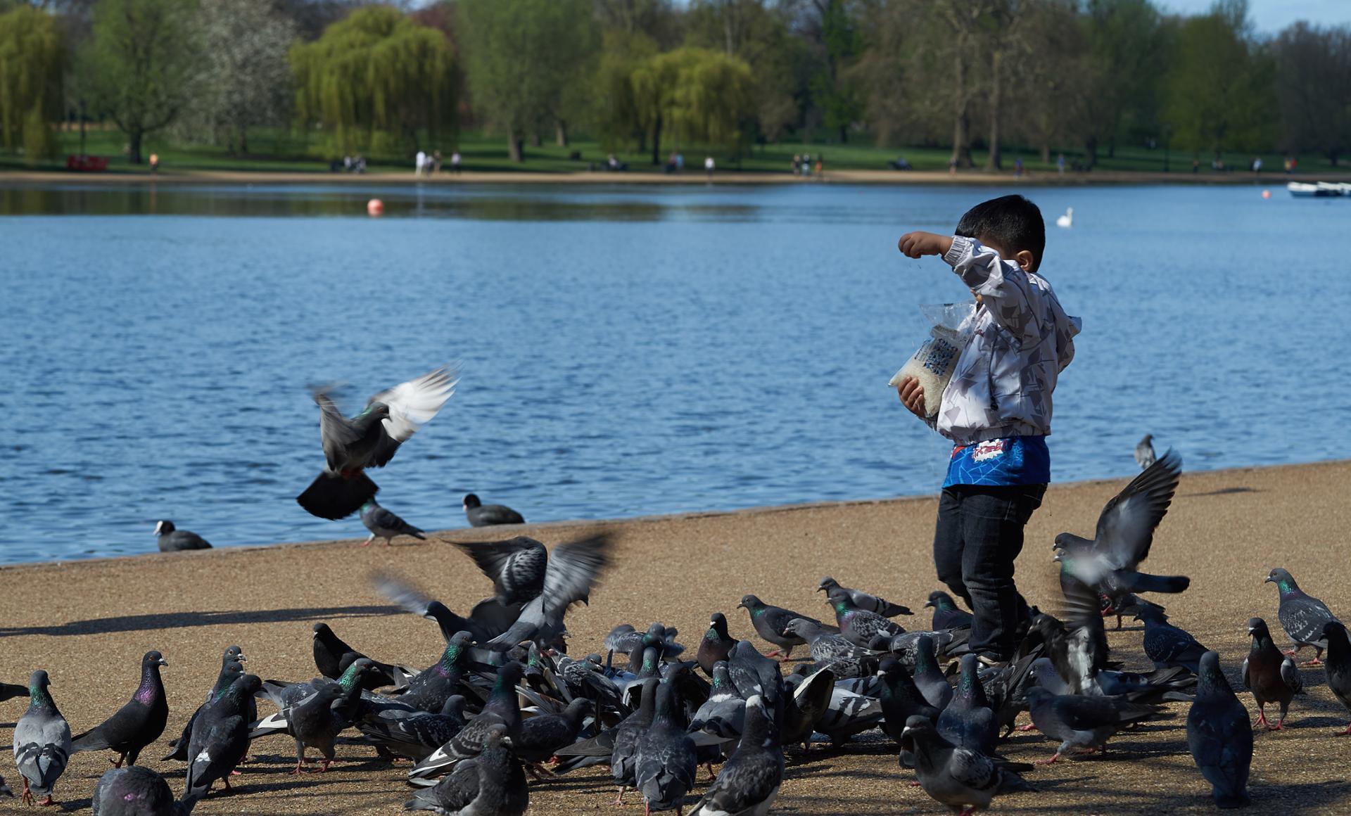 l'enfant aux pigeons.jpg