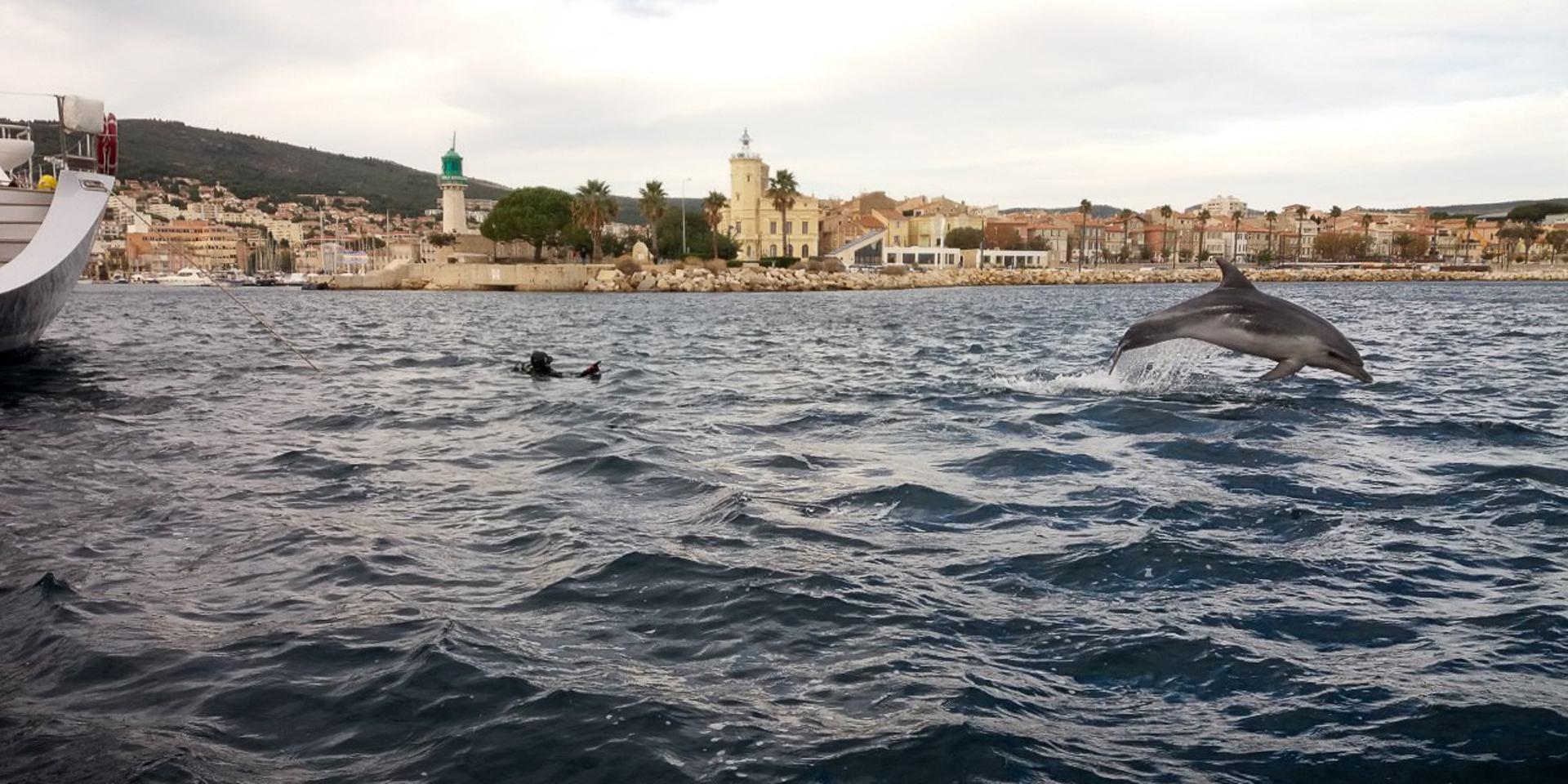 Balou...le dauphin