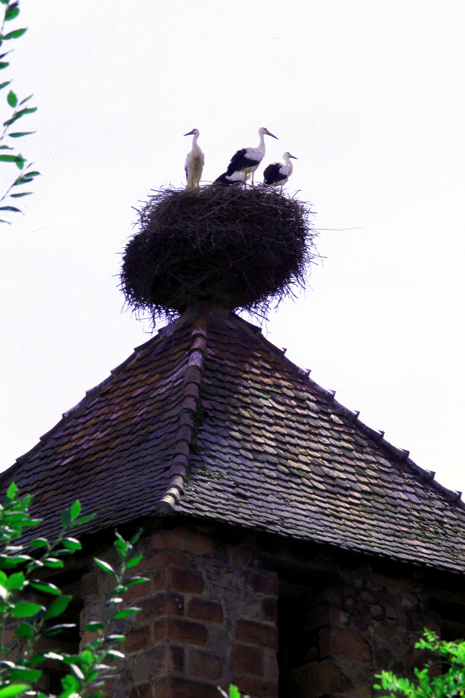 Un nid de cigognes haut perché