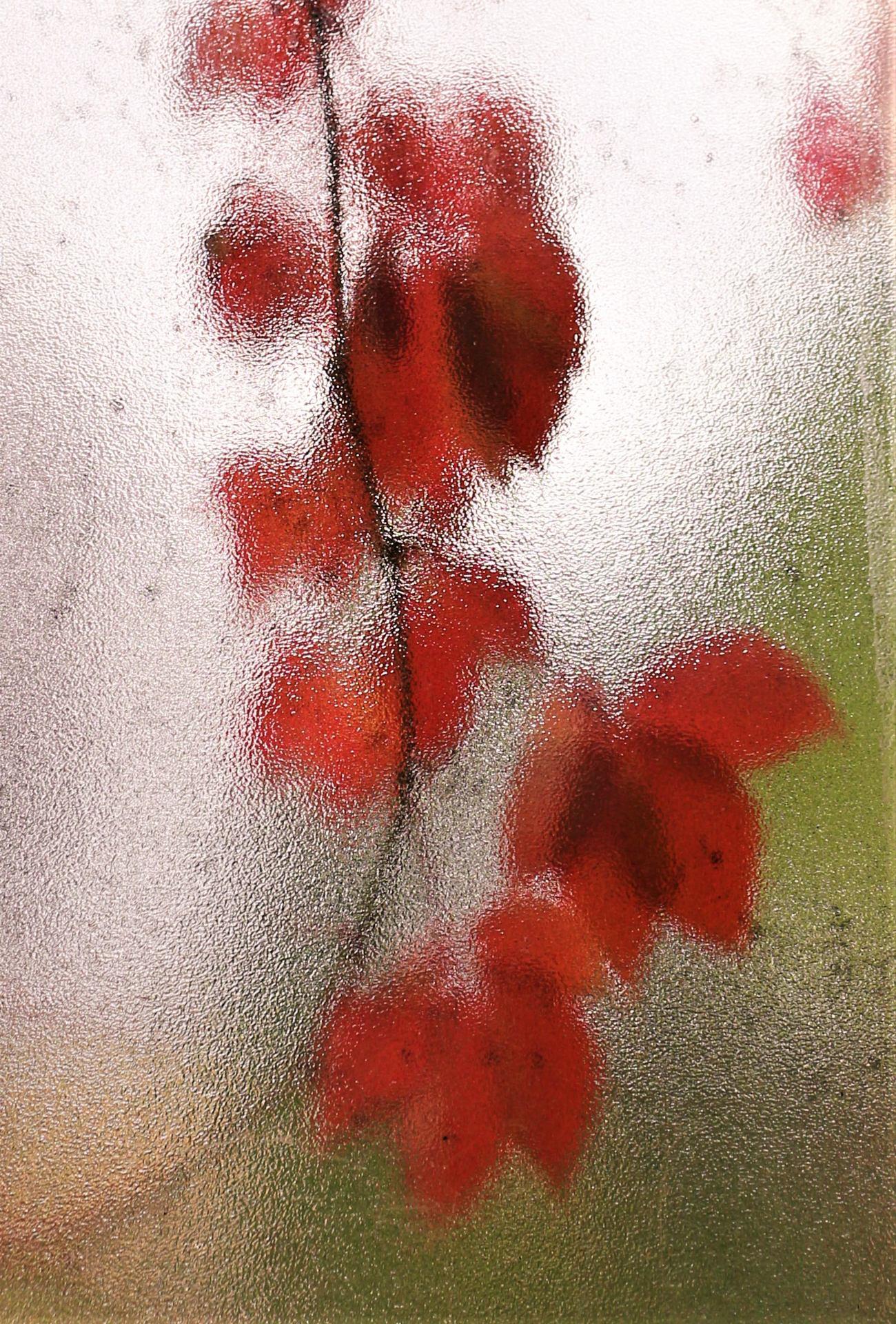 Par la fenêtre dépolie