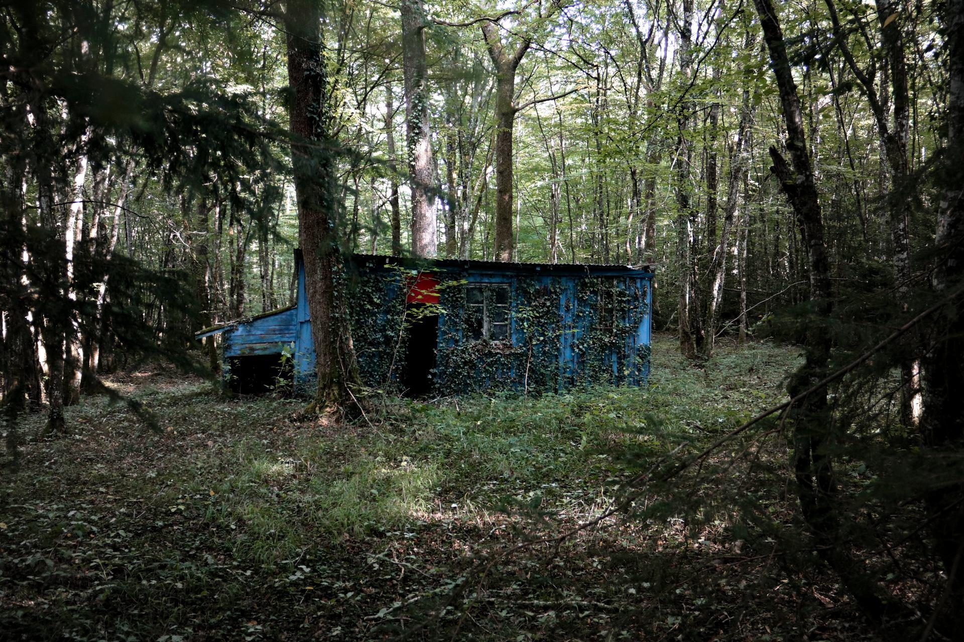 Elle vivait dans la forêt