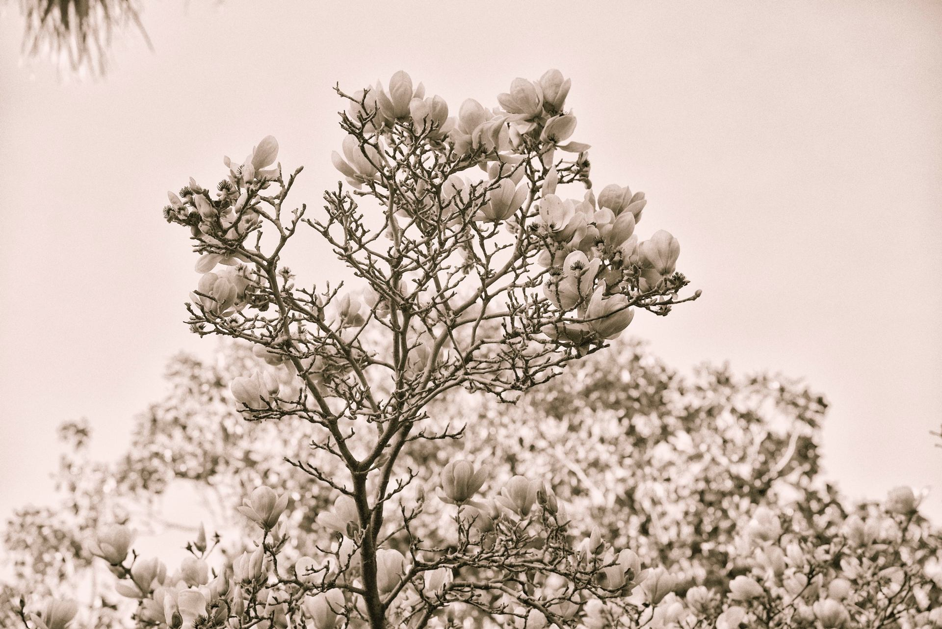 Floraison...
