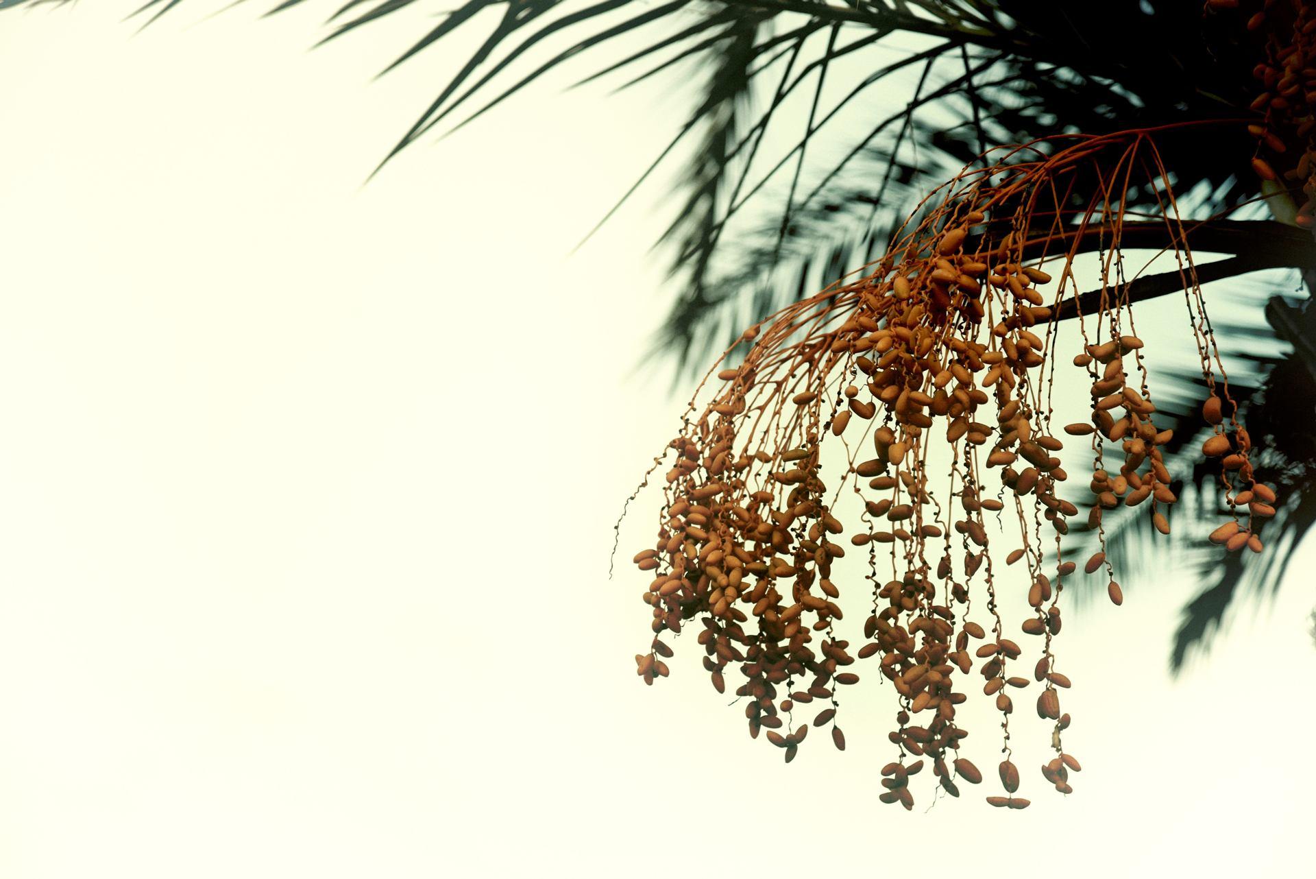 Les graines de l'automne...