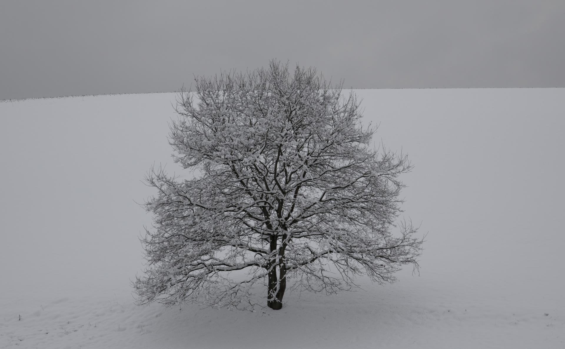 arbre solitaire.jpg