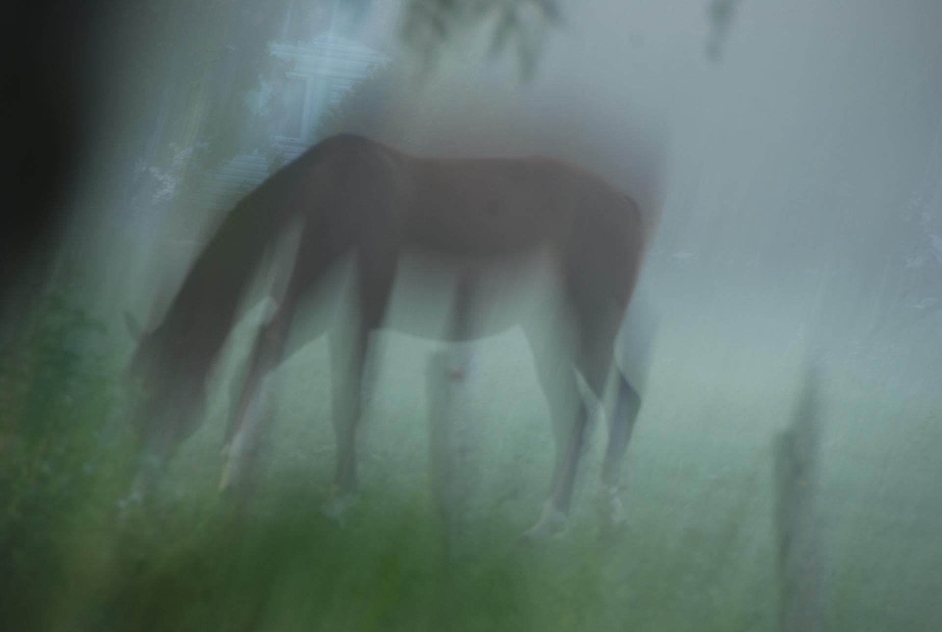A l'aube dans le marais Poitevin