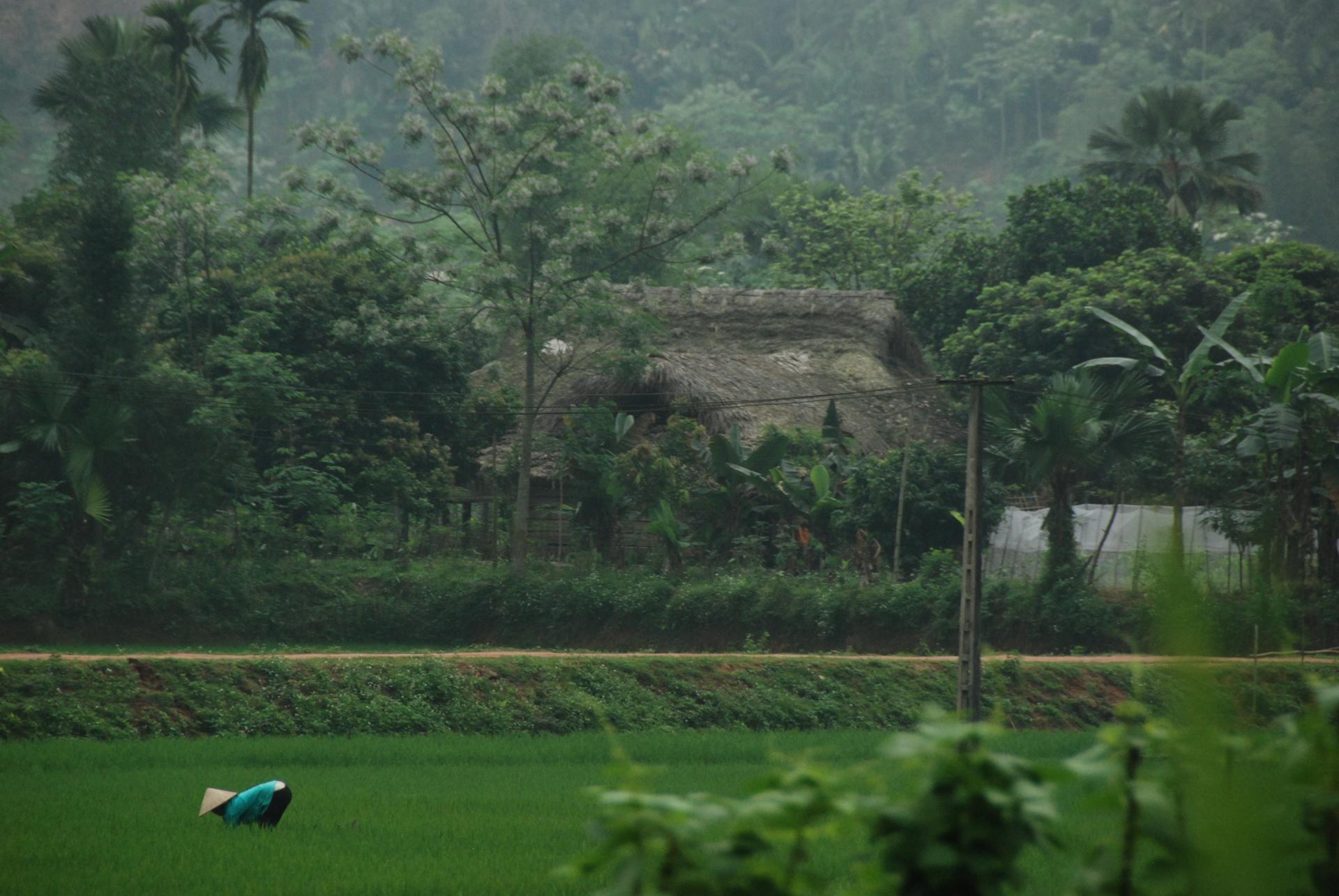 Aux champs, région de Bac Ha