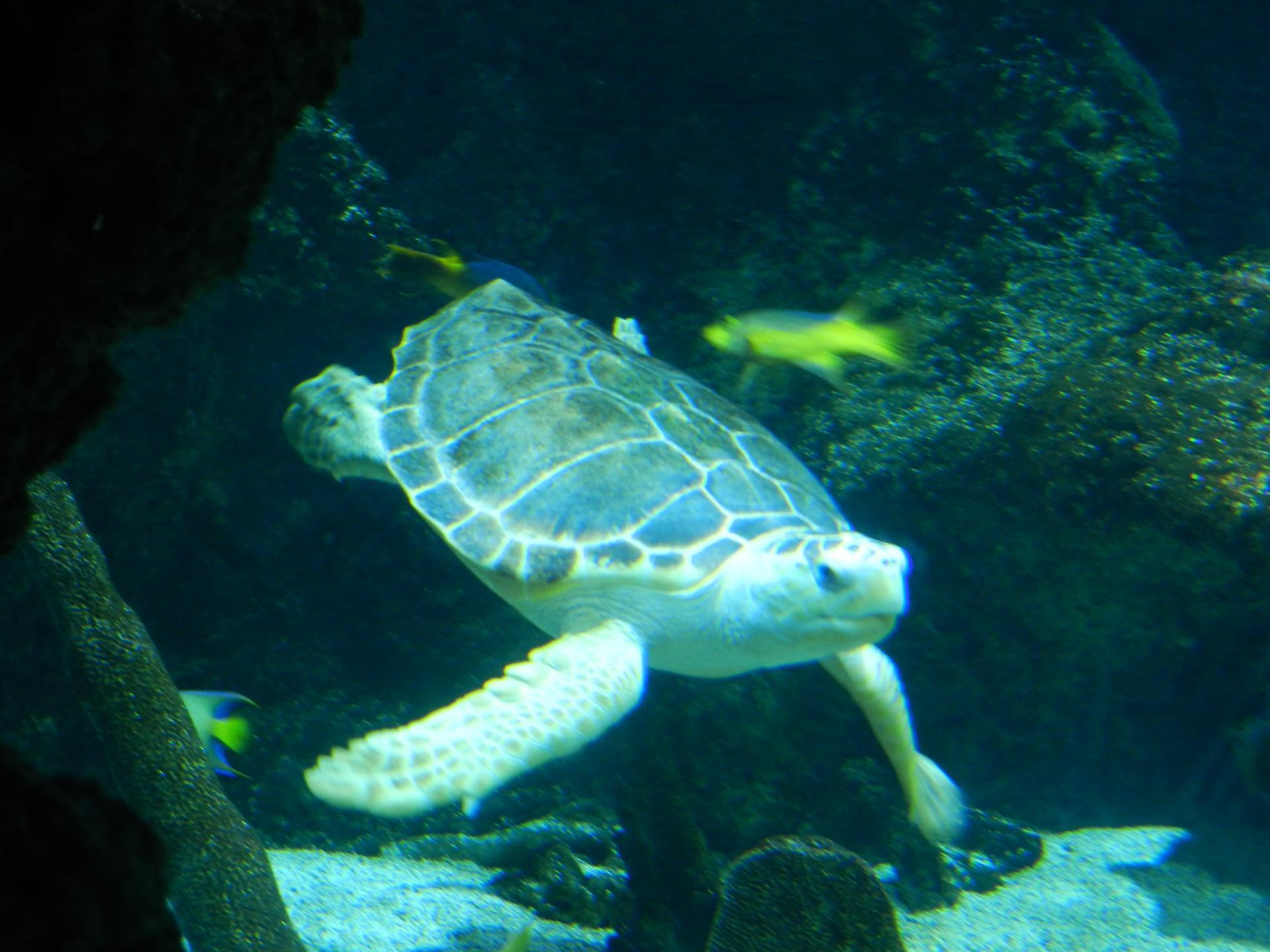 l 'aquarium