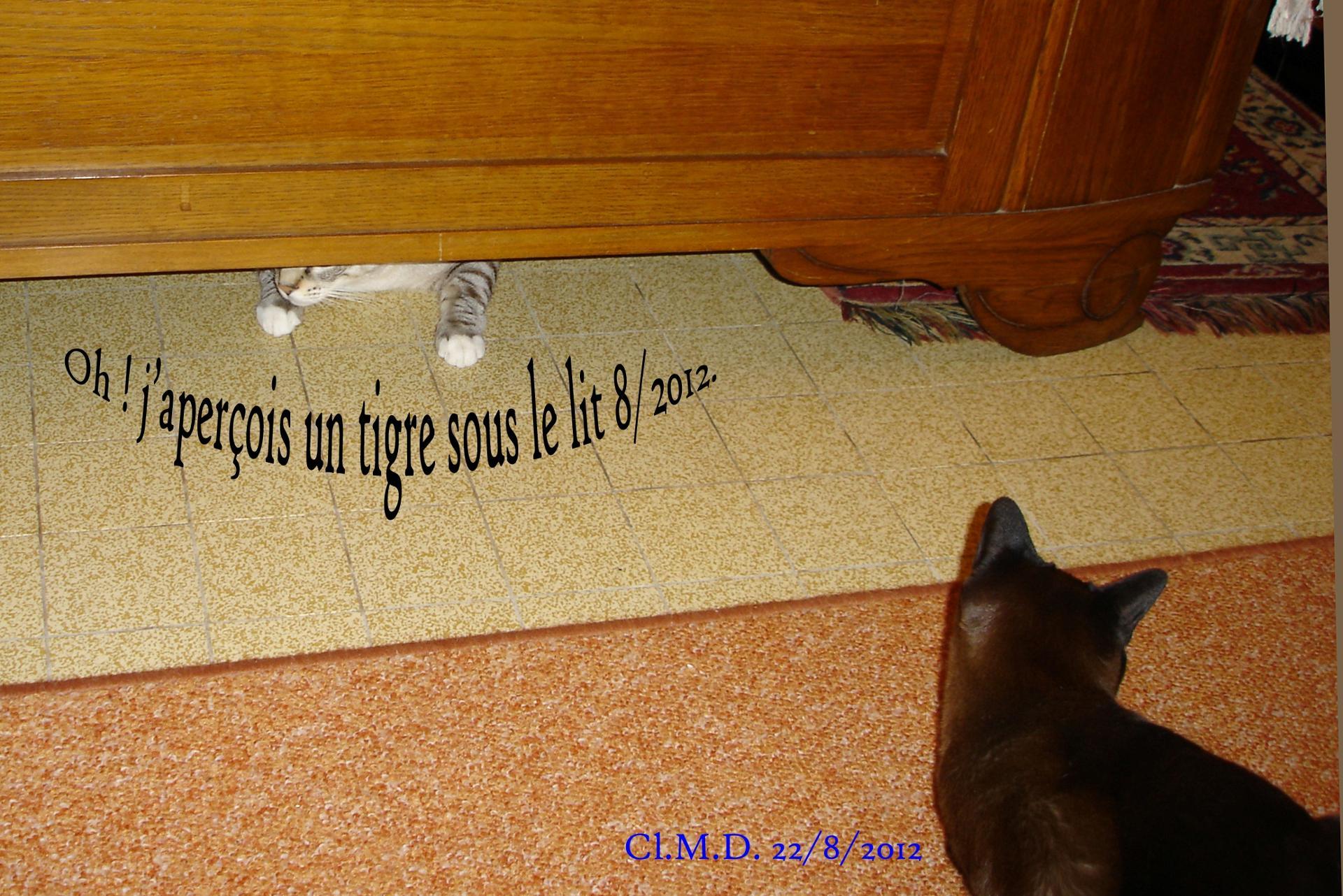 Gustav, le chat tigré nous fait coucou.