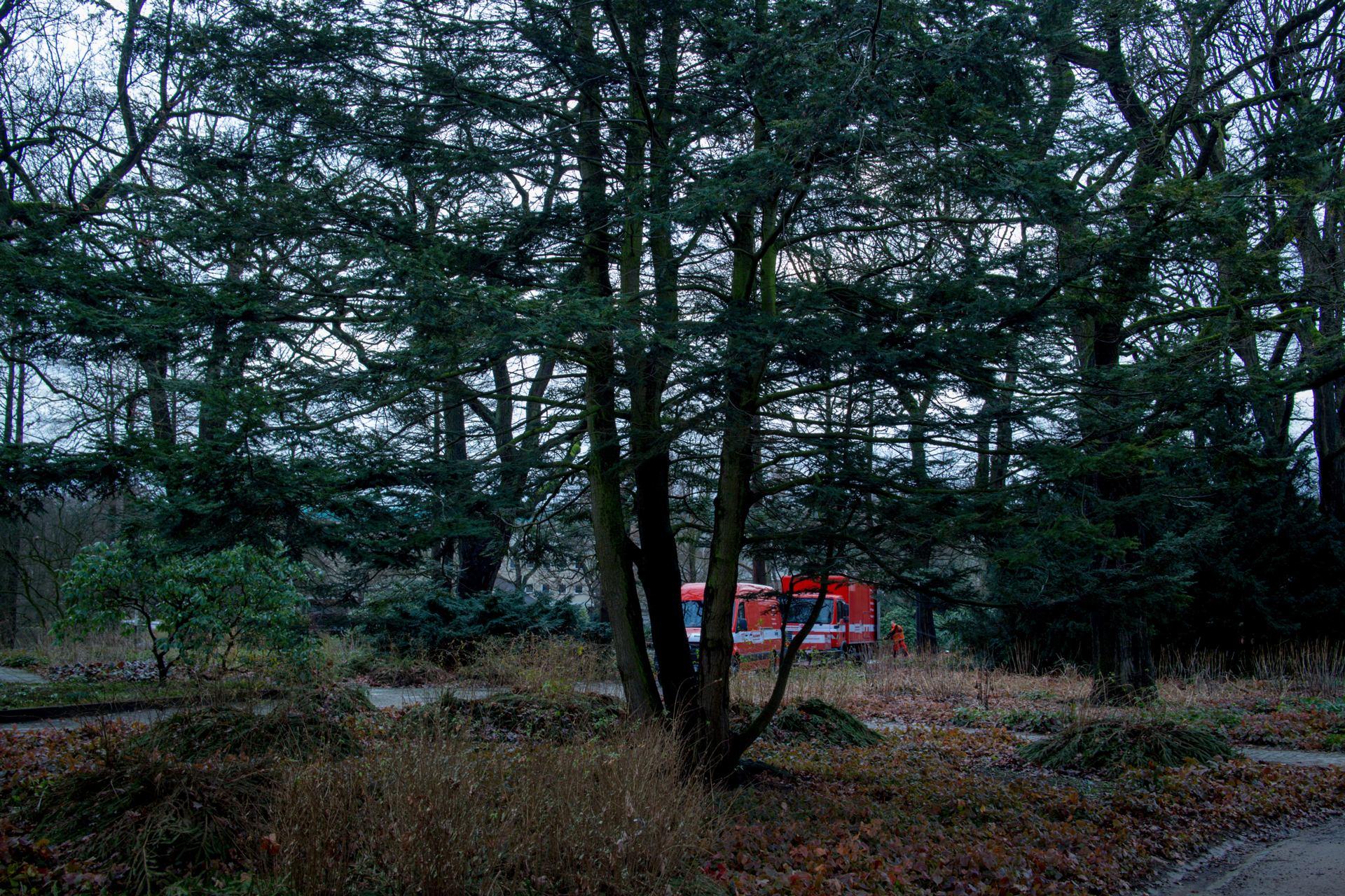 2 camions rouges sur fond de nature verte