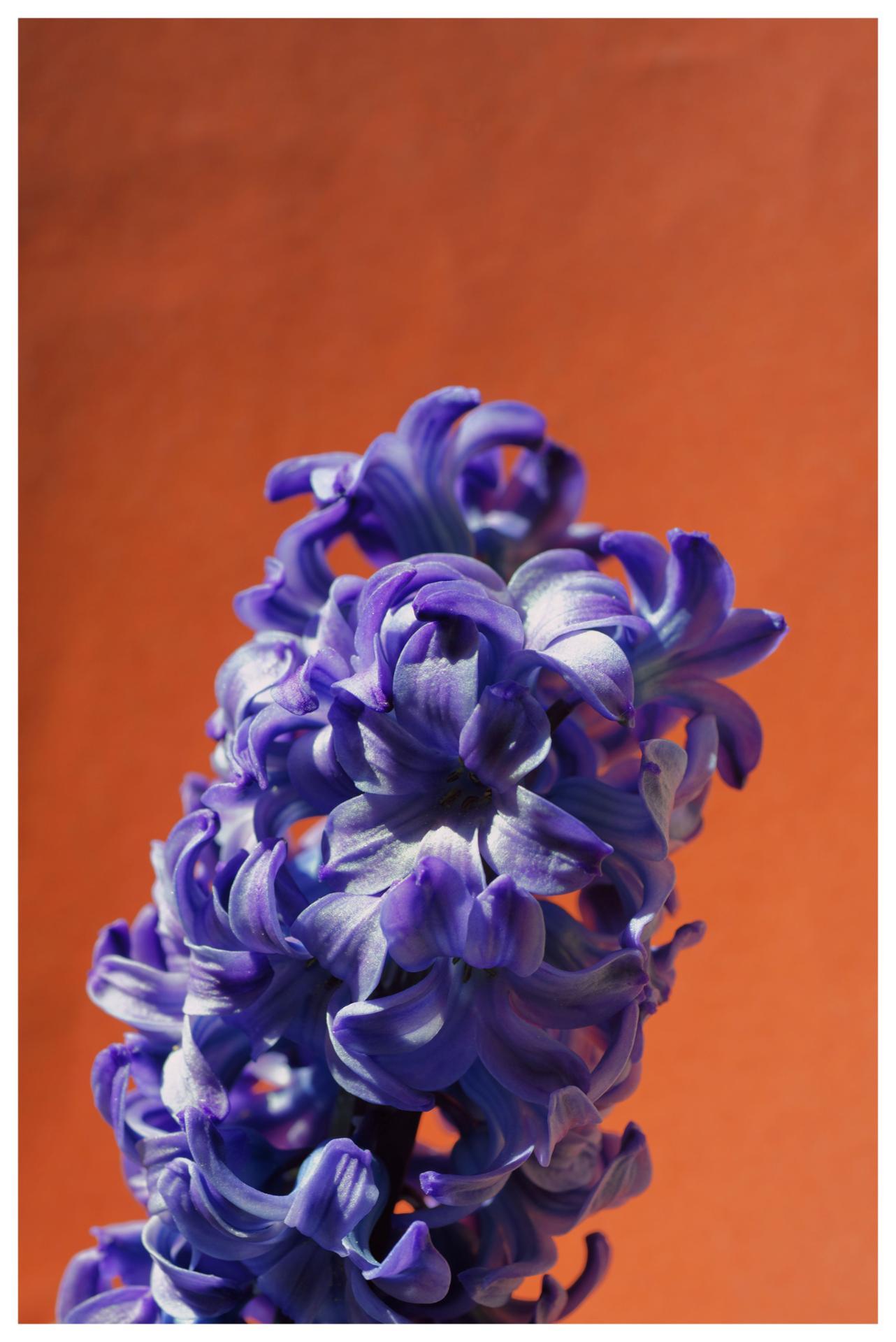 fleur 33