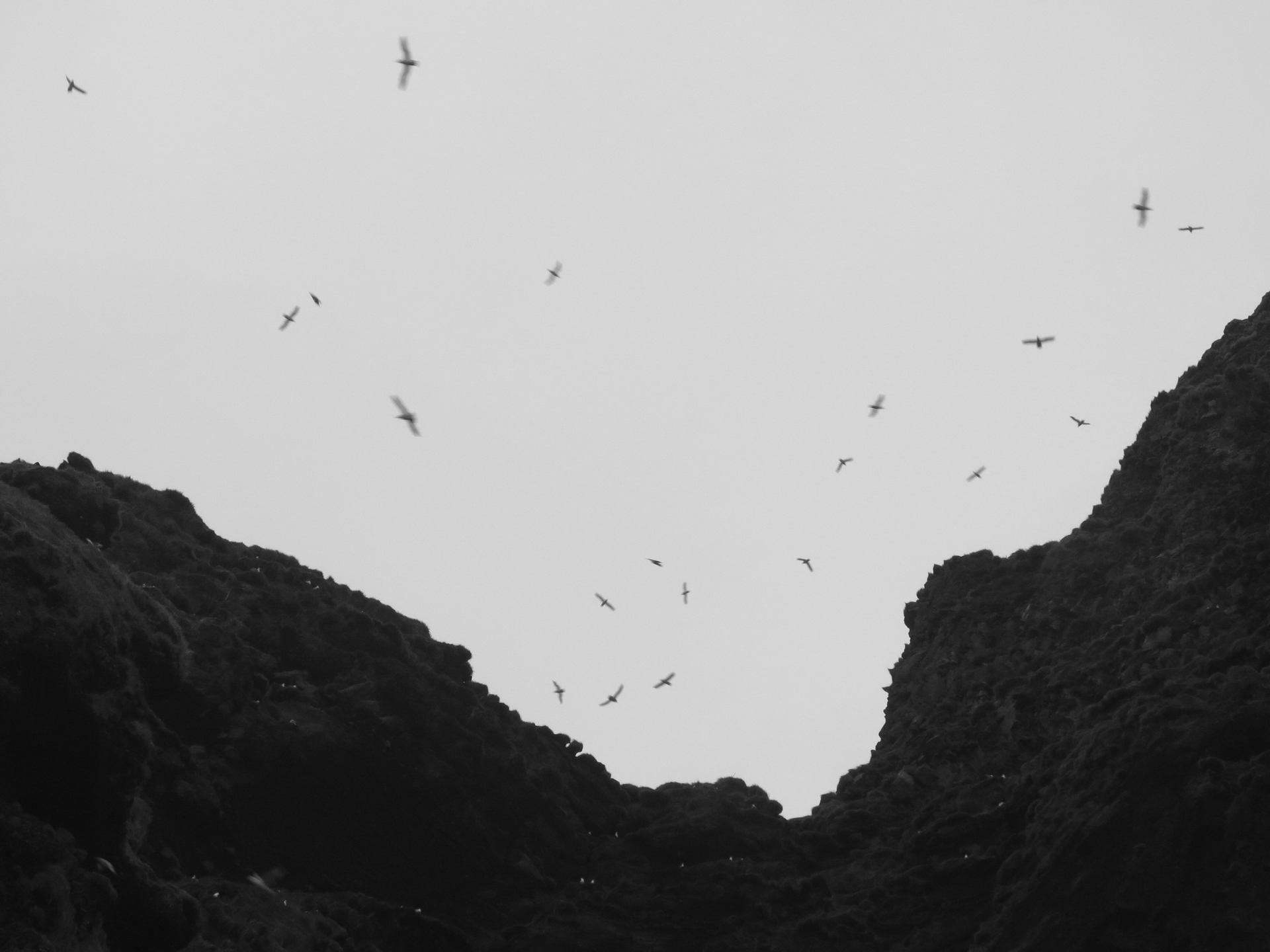 Vik et ses oiseaux