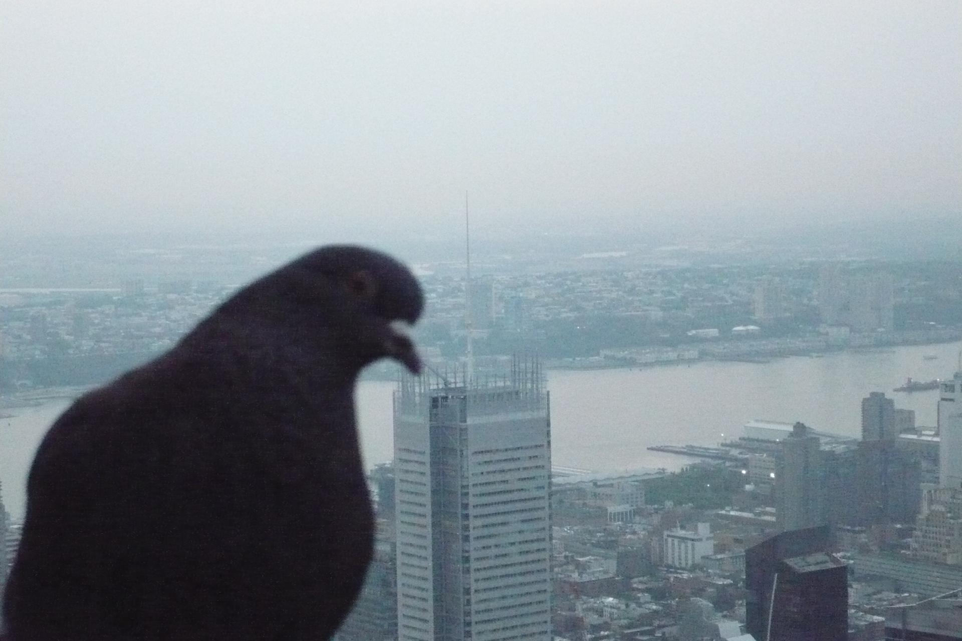 Survoler Manhattan.JPG
