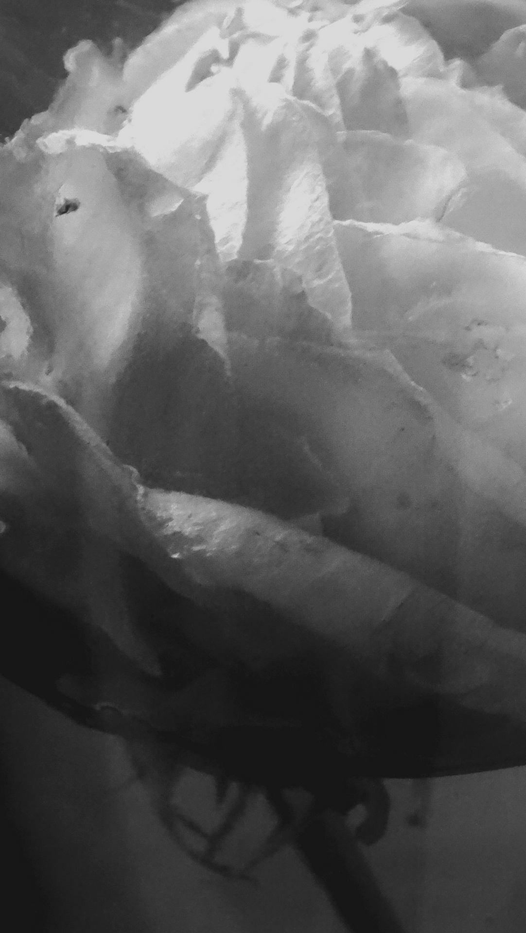 Rose secret