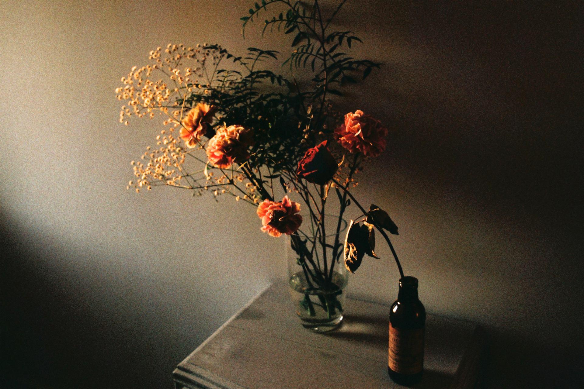Lumière sur les roses