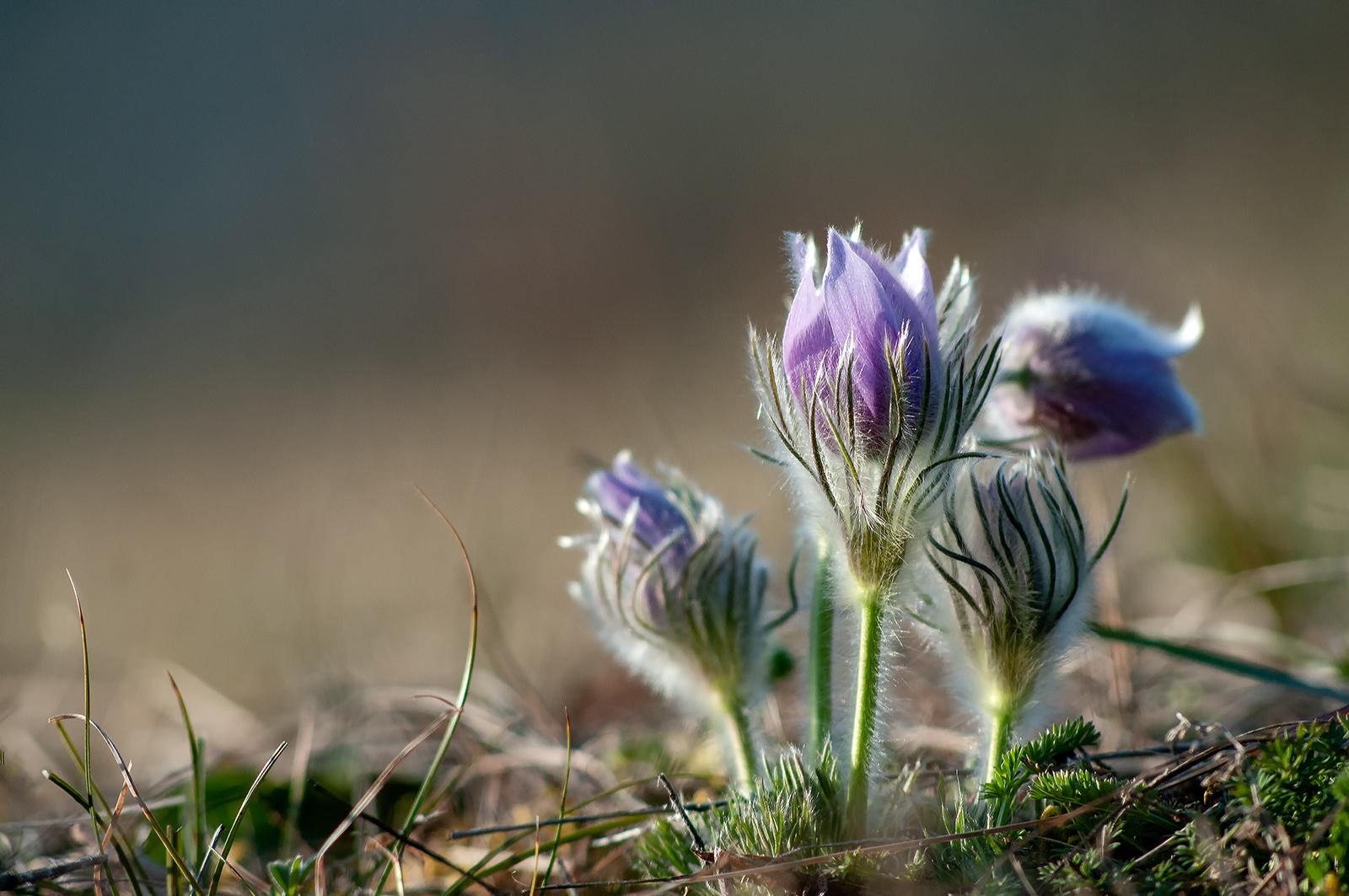 Le printemps pulse
