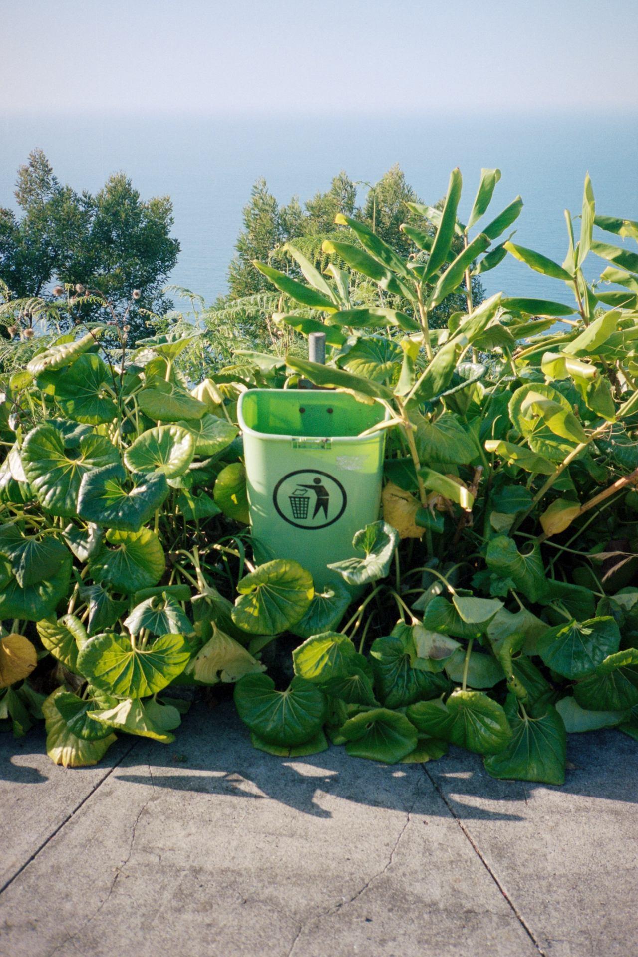 Madère green Trash, Yashica T5, Portra 400.