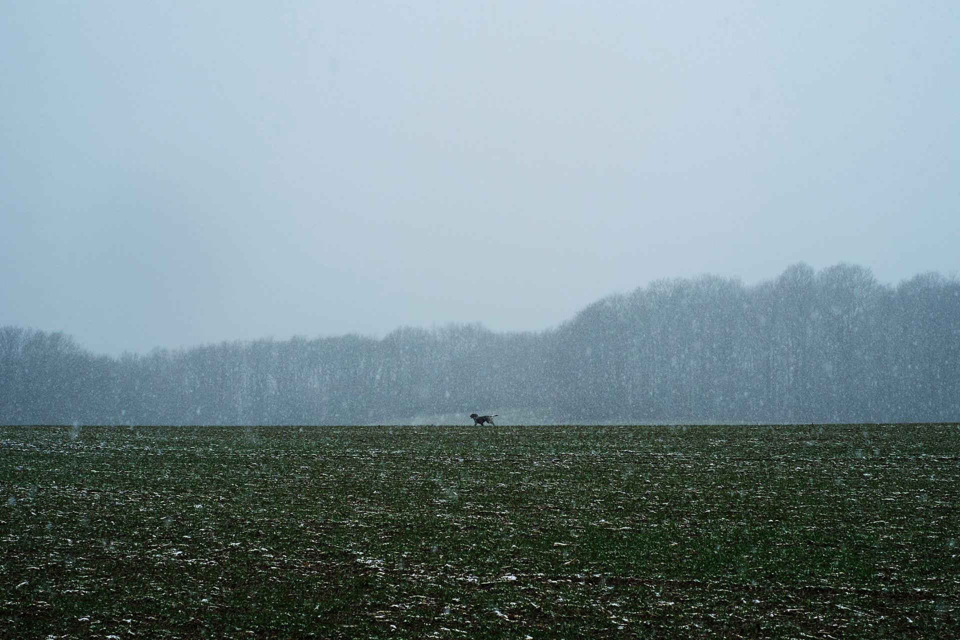 Chien courant sous la neige