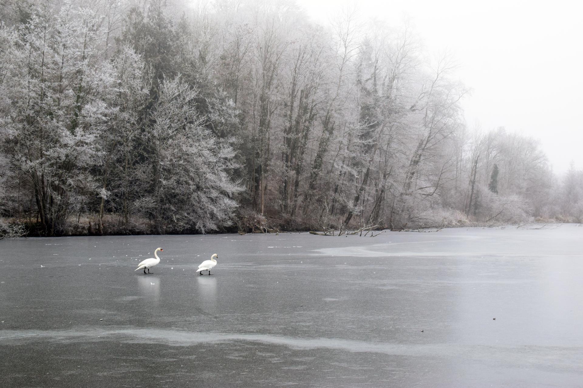 balade sur la glace