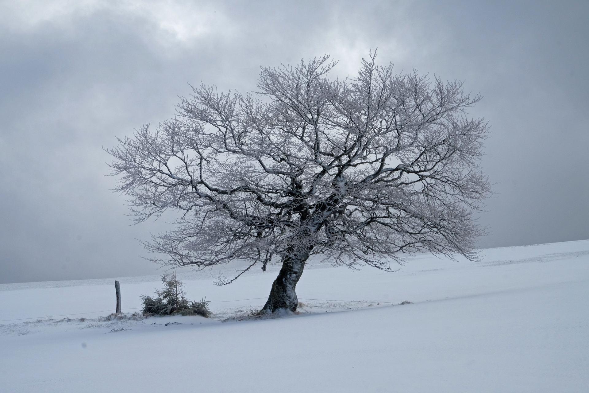 Si j'étais un paysage - Hiver dans les Hautes Vosges