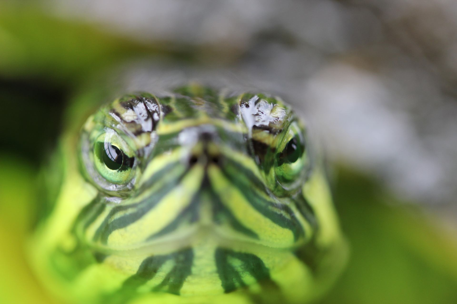 Tête à tête avec une tortue
