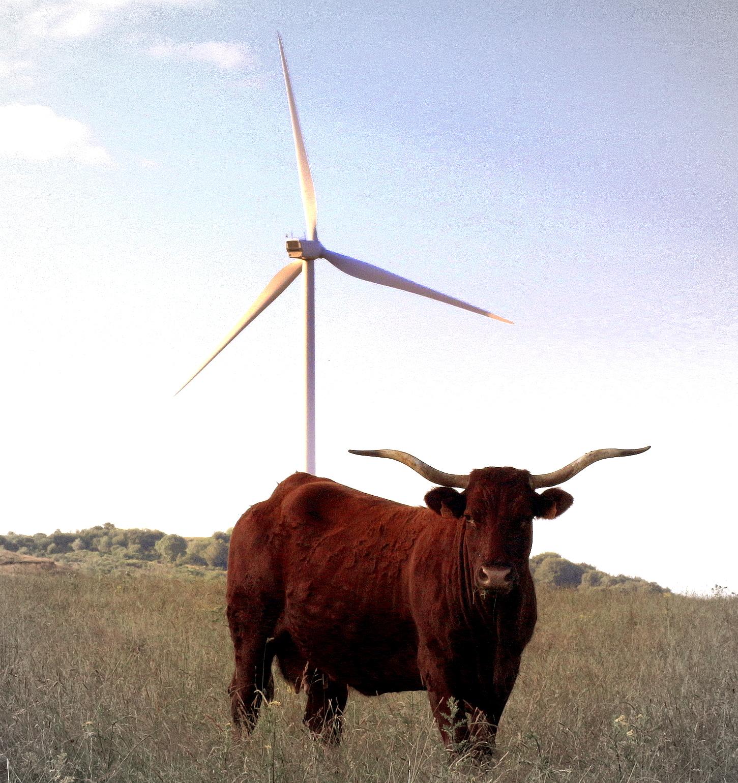 La vache et l'éolienne