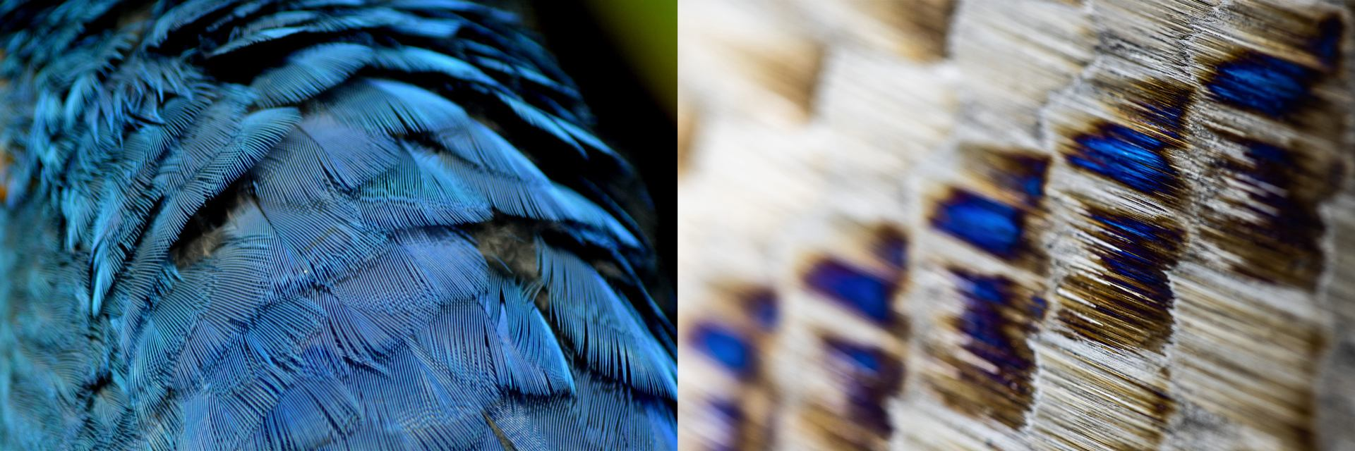 19 (perroquet).jpg
