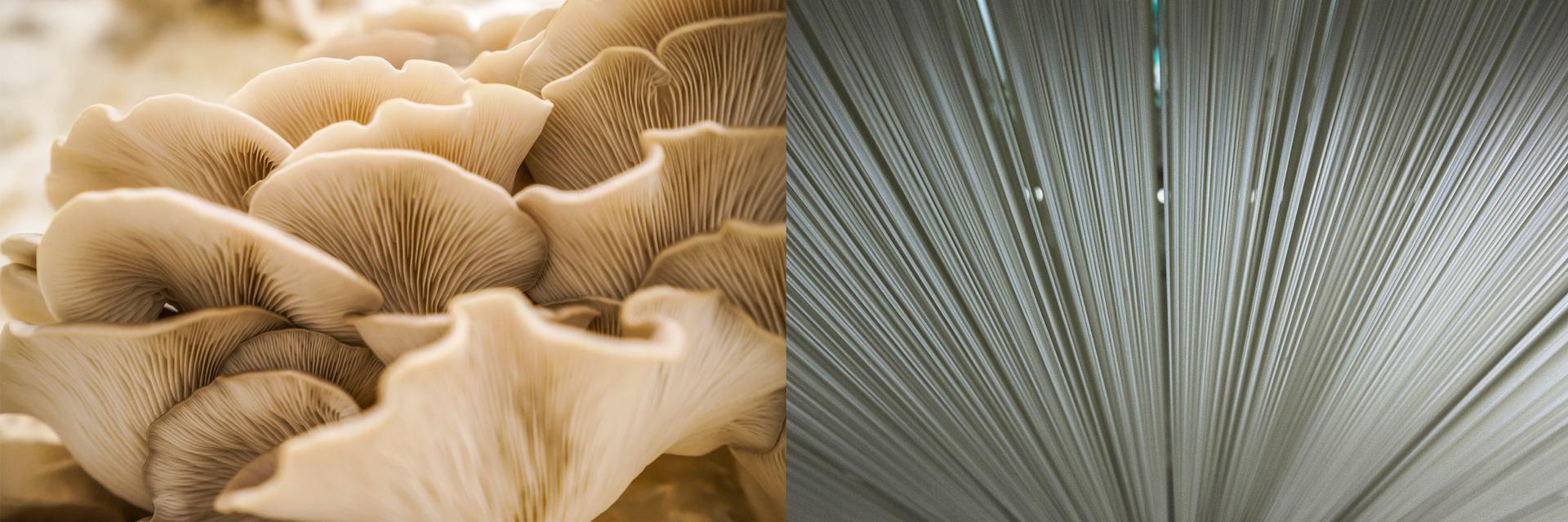 59 (champignons).jpg