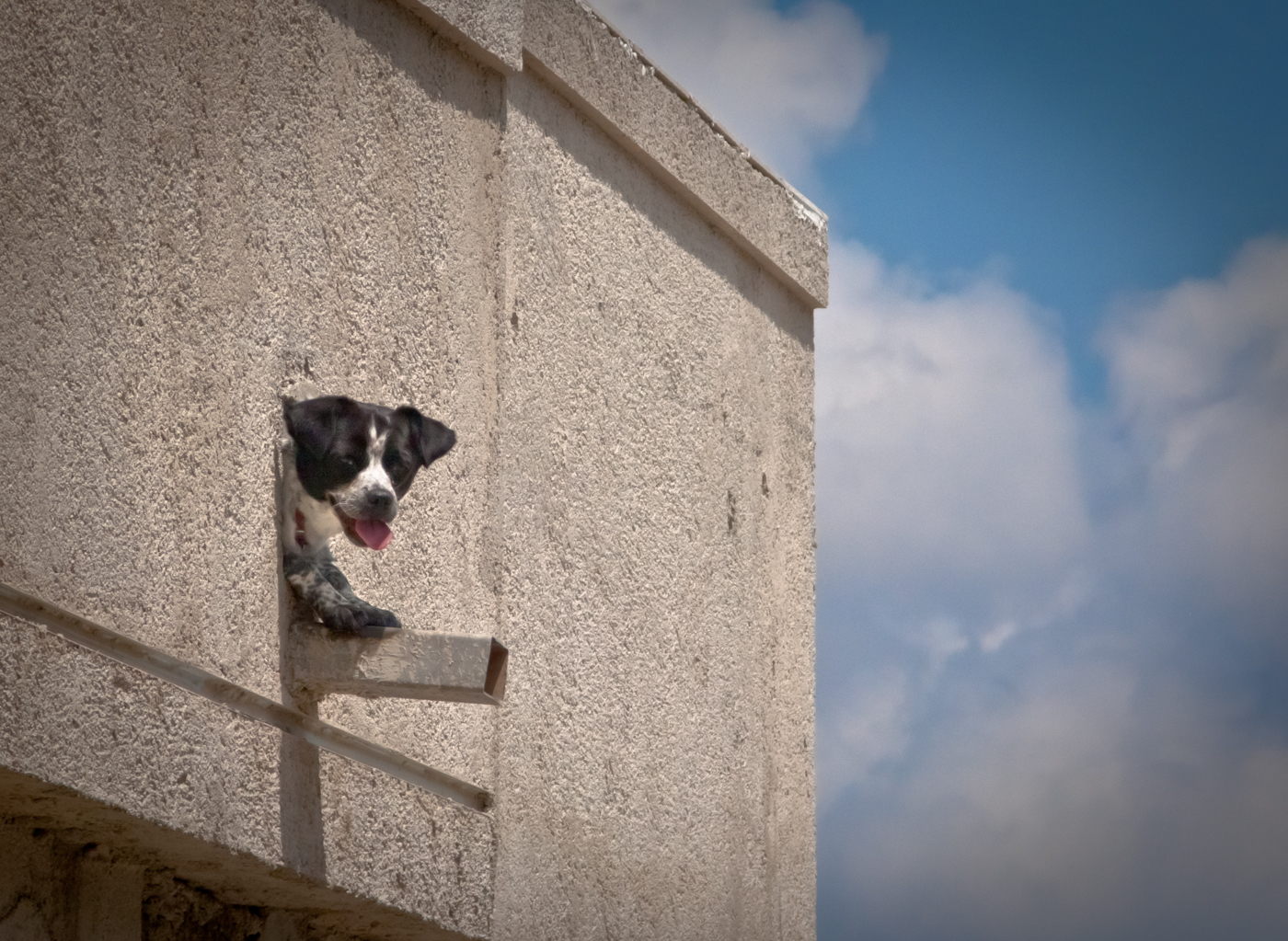 chien de gouttière