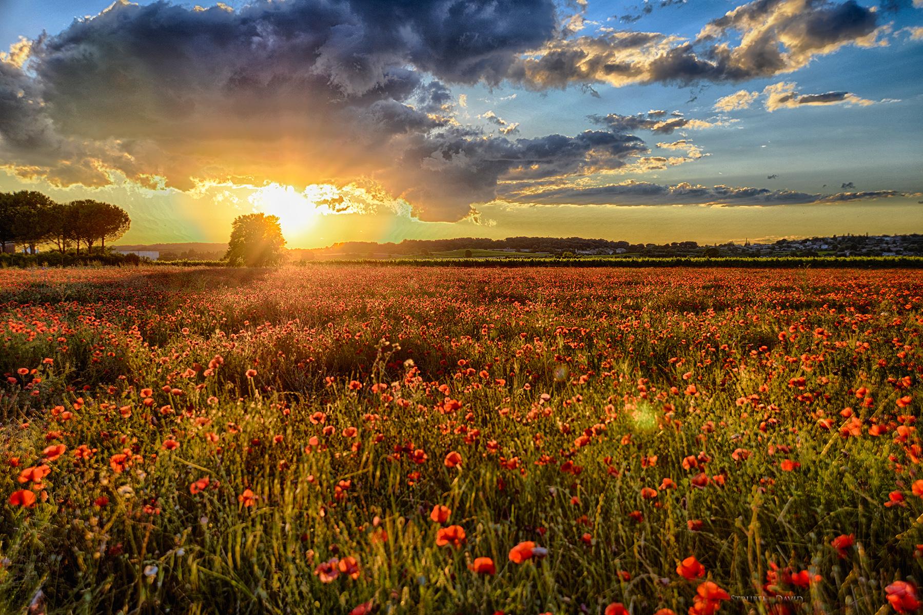 coucher de soleil dans les champs