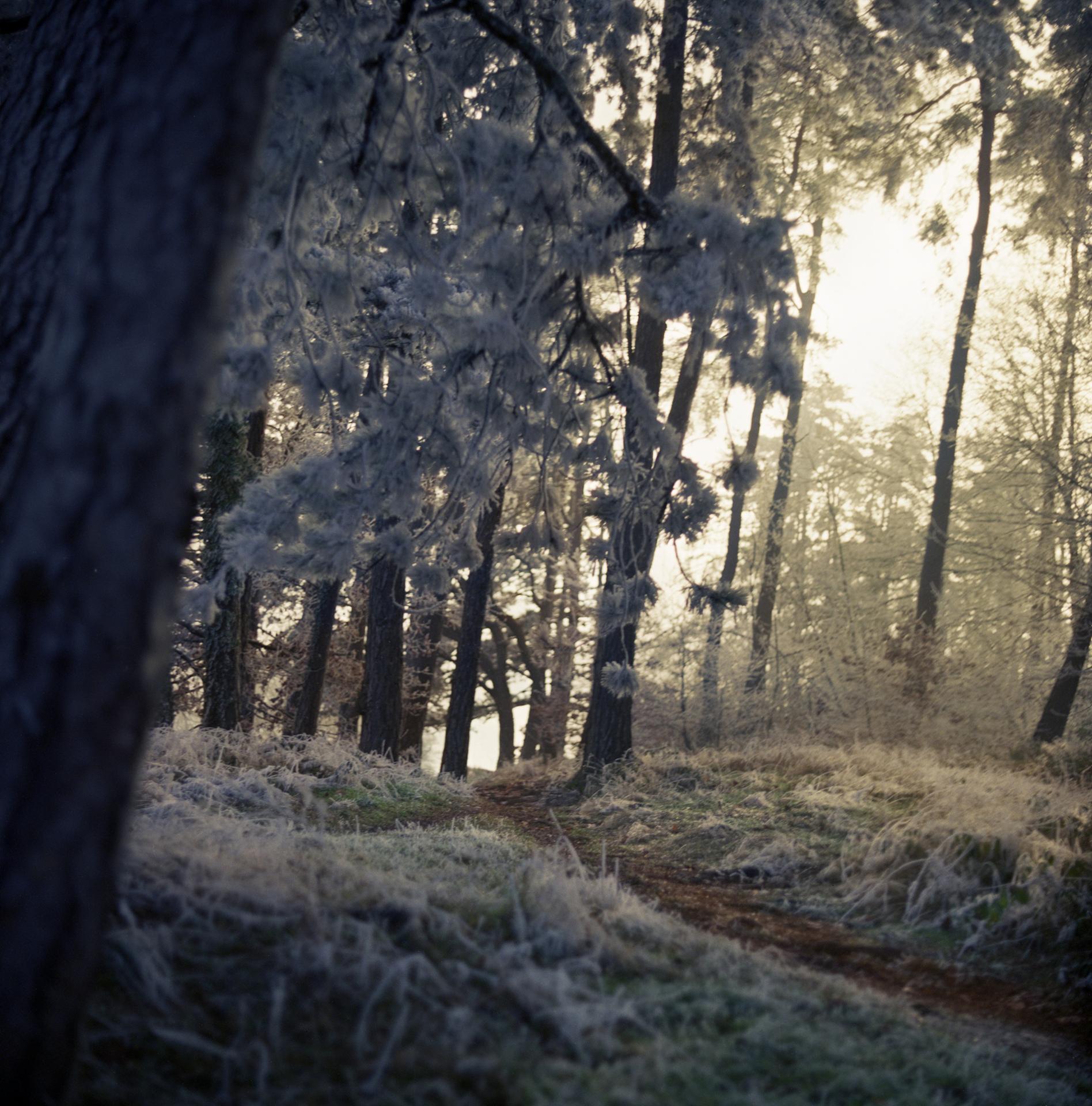 Snow forest creusot