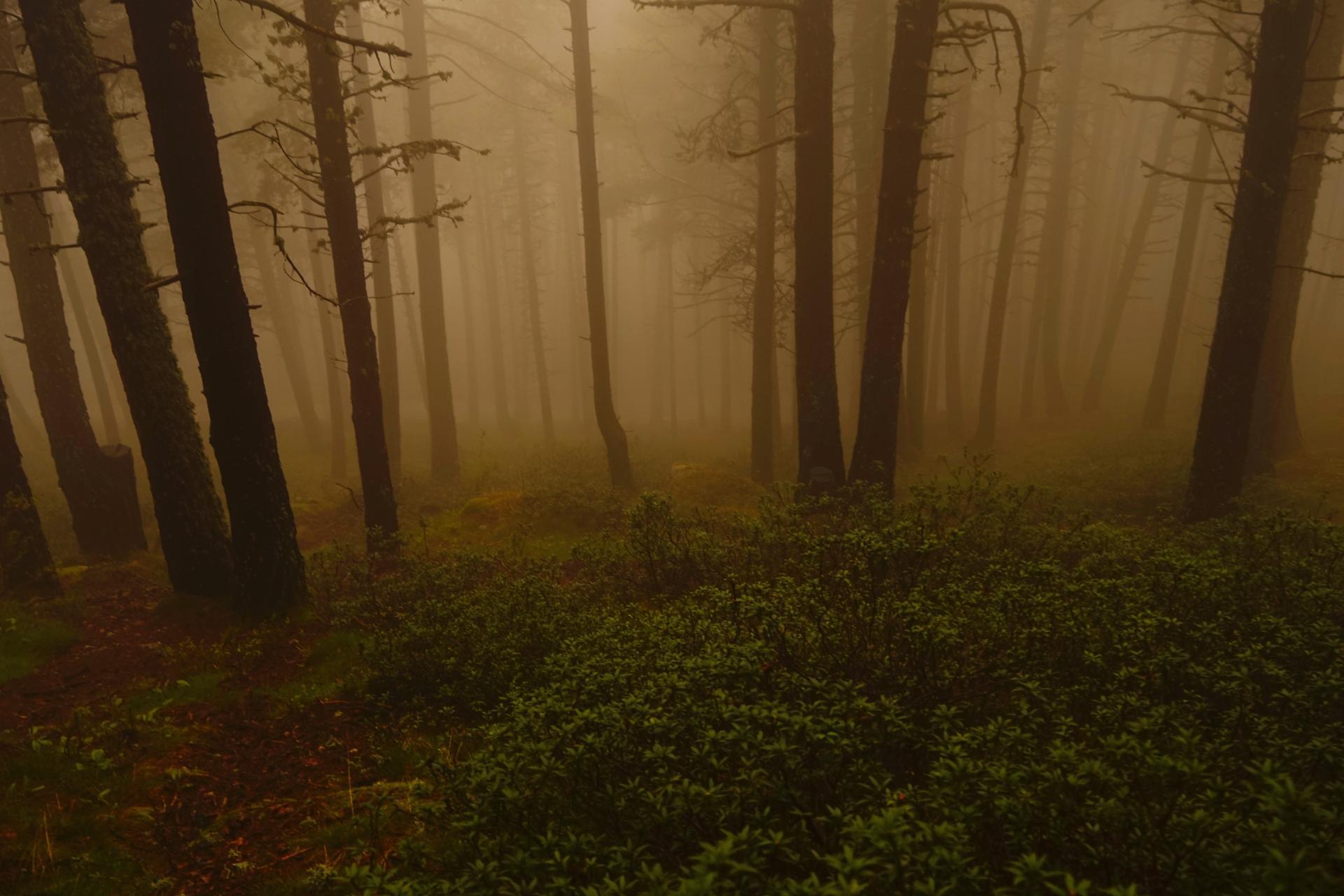brouillard magique