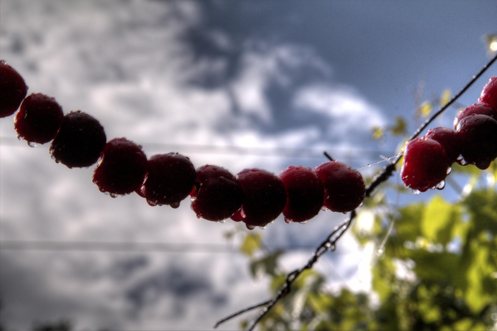 Rouge -Cerise