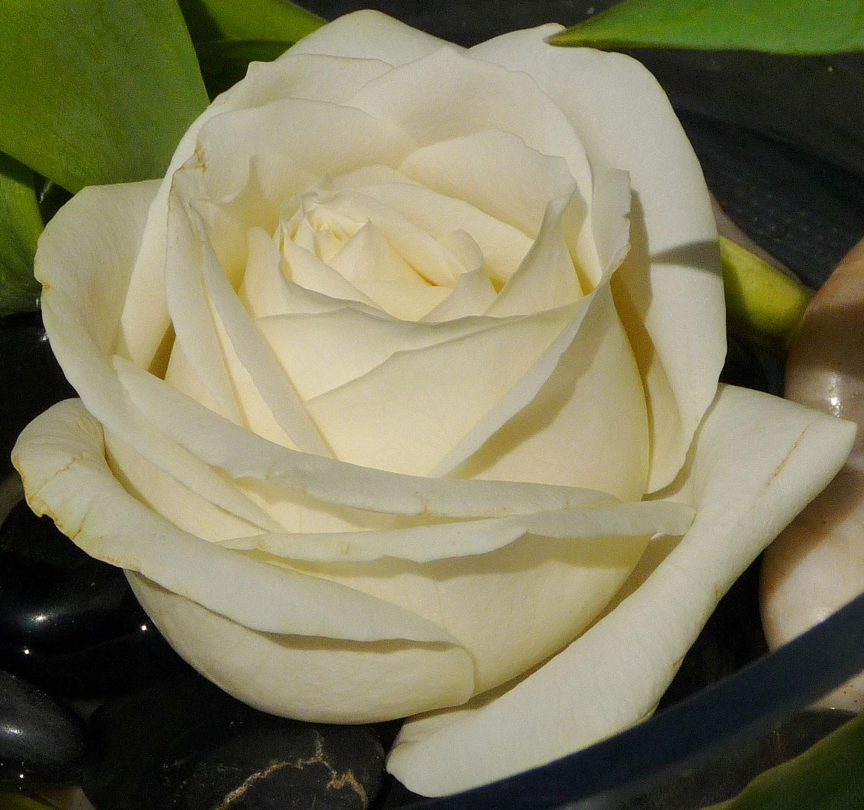 """Art Floral : Macro Rose """"Avalanche"""" ... Pureté retrouvée !"""